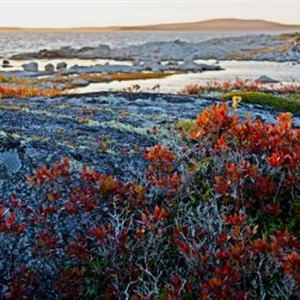"""Untitled (Peggy's Cove, NS) (2012)"""